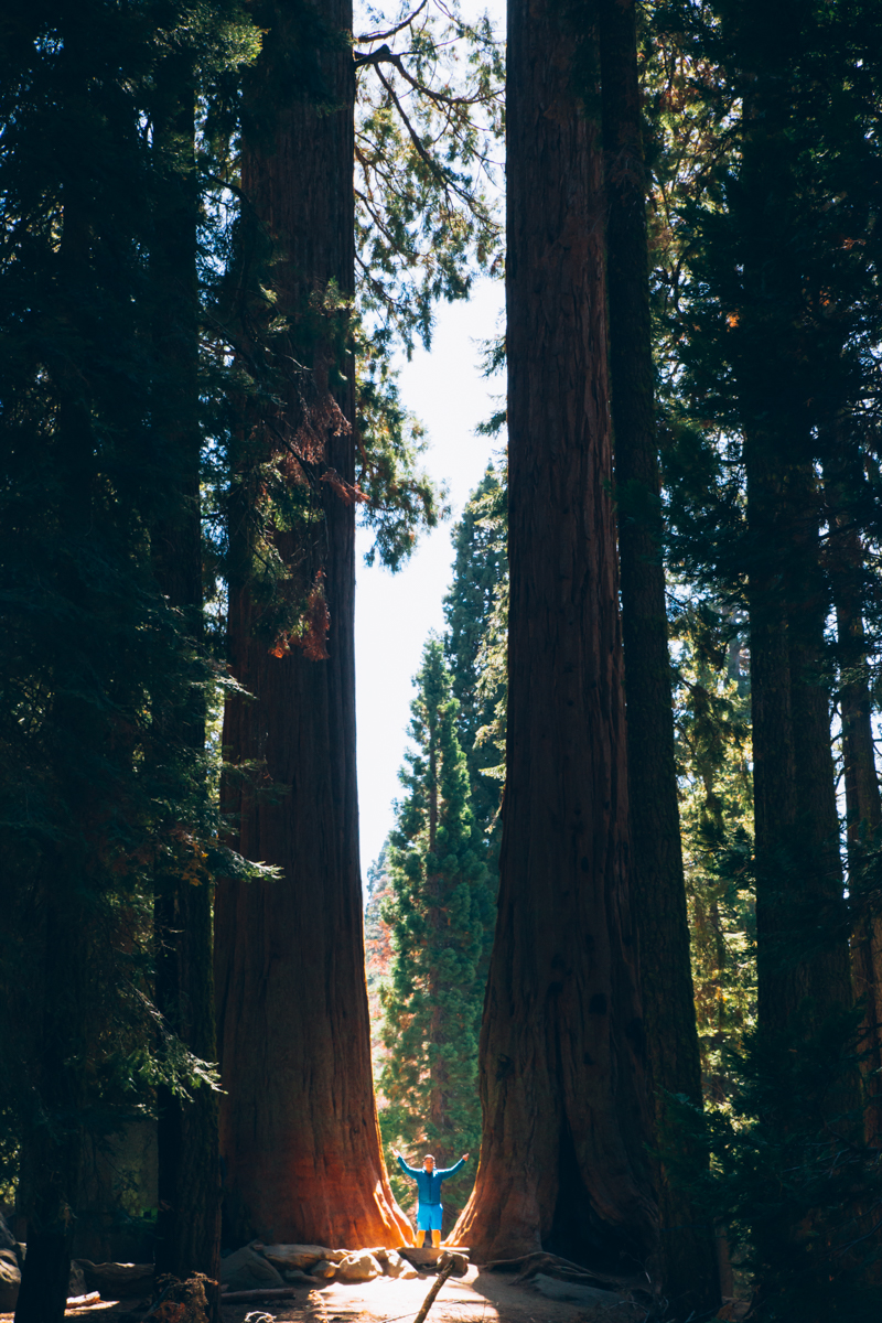Standing between two giant sequoia trees in California.